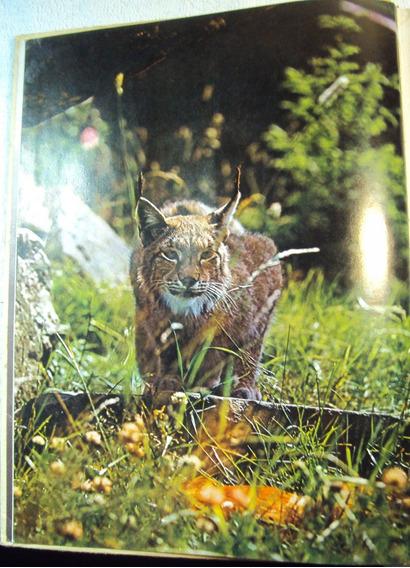 1621 Livro 1977- Lvr- Raros Animais Das Regiões Selvagens