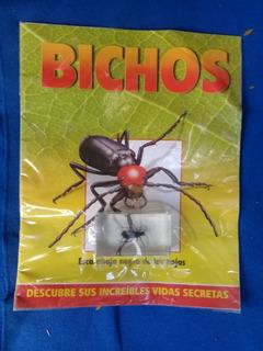 Coleccion Bichos . Escarabajo Negro De Las Hojas, Nuevo