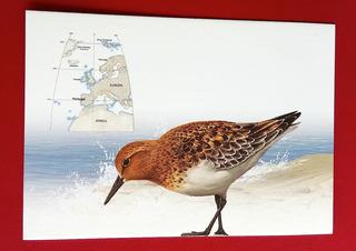 V 9229 Cartao Postal Portugal Ave Passaro Mar Praia