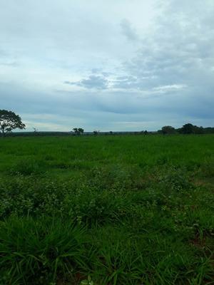 Fazenda A Venda Em Santa Rita Do Tocantins - To - 678