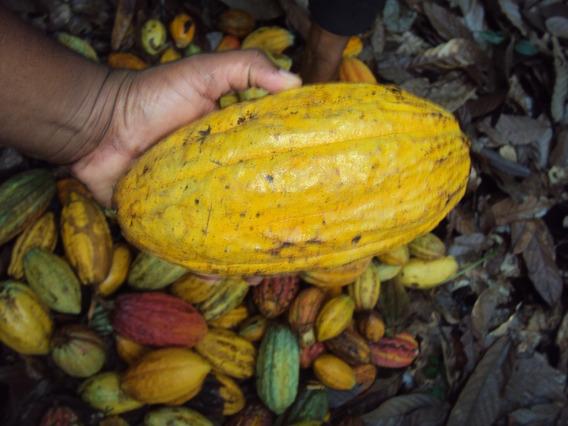 Fincas De Cacao En Venta