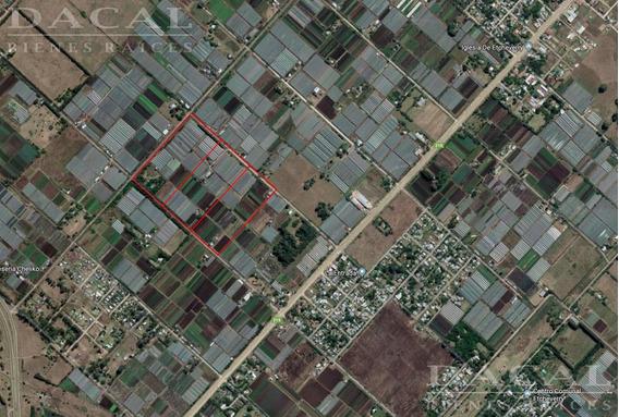 Campo En Alquiler En La Plata Calle 232 E/ 38 Y 44 Dacal Bienes Raices