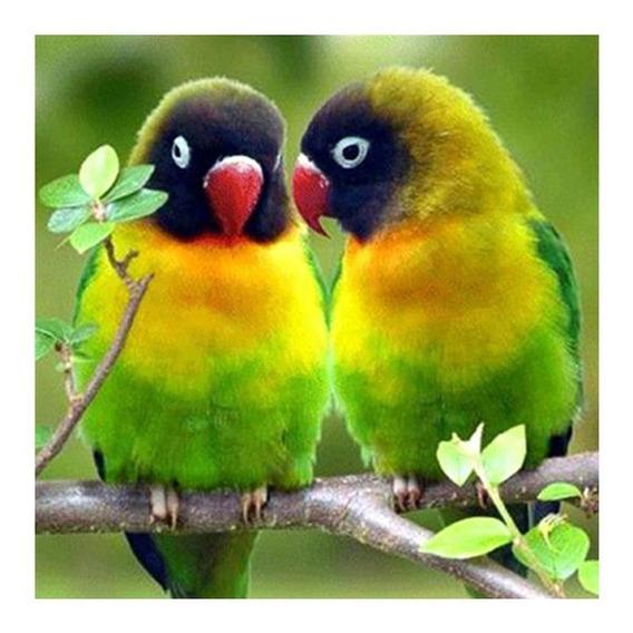 5d Diy Diamante Pintura Bonito Papagaios Cruz Ponto Bordado