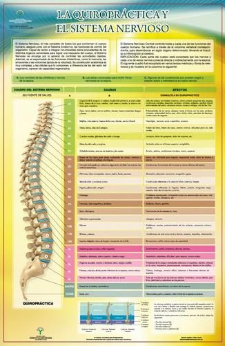 Imagen 1 de 1 de Posters La Quiropráctica Y El Sistema Nervioso