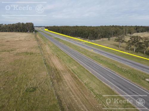 340 Has En Venta En Brandsen. Campo Mixto Sobre Ruta2-  Potencial Desarrollo Inmobiliario