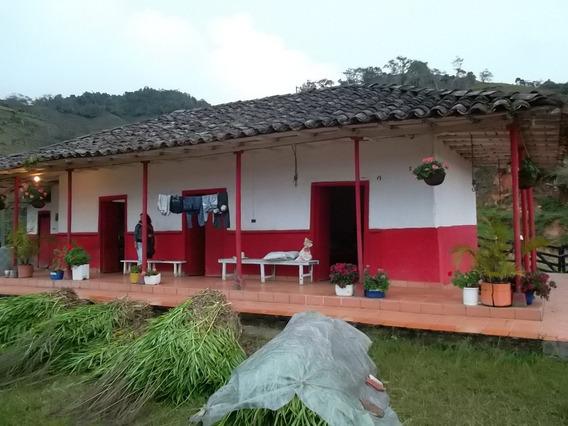 Ganga Finca Ganadera En Concepcion Antioquia
