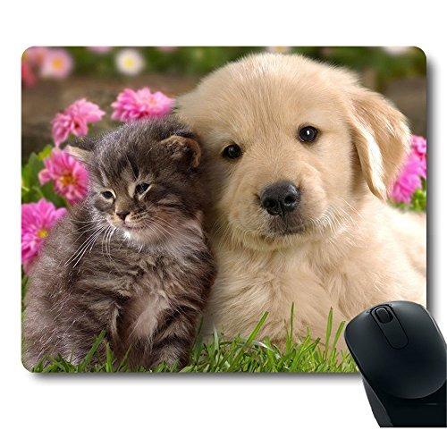 Imagen 1 de 3 de Grey Baby Cat Gold Dog Golden Puppy Cuddle Cerrar Juntos Lov