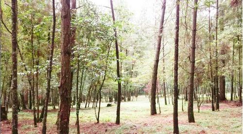 Terreno En Venta Camino A San Agustin Valle En Camino A San Agustin