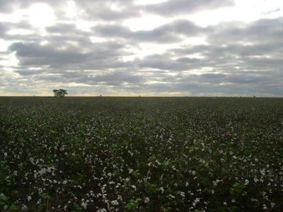 Santa Fe: Santa Margarita, Rn95, Campo Mixto 4000 Has Siembra Algodon, Girasol, Maiz Y Sorgo, Argentina