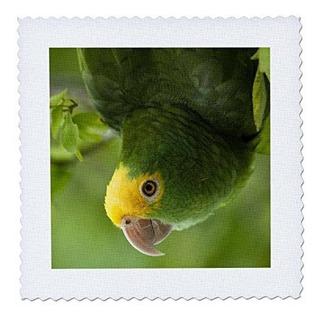 3drose Qs_85626_4 Loro Amazona Amarilla Pájaro Tropical B