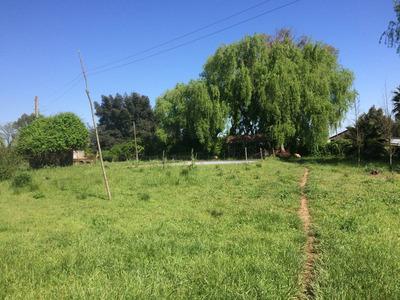 Campo En Pelarco 24 Ha Con Maquinaria Y Animales