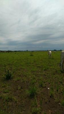Fazenda A Venda Em São Félix Do Araguaia, Centro - 526122