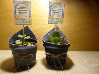 Recuerdos De Bautizo Con Cactus.Recuerdos Bautizo Cactus En Mercado Libre Chile