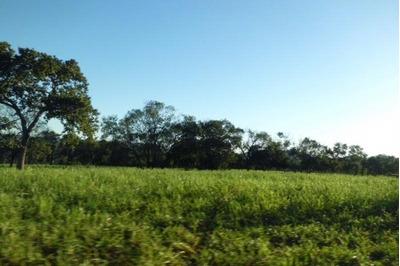 Fazenda A Venda Em Rio Negro - Ms, ( Pecuária ) - 503