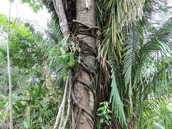 Finca Puerto Jimenez 18 Hectareas Bosque Virgen Costa Rica