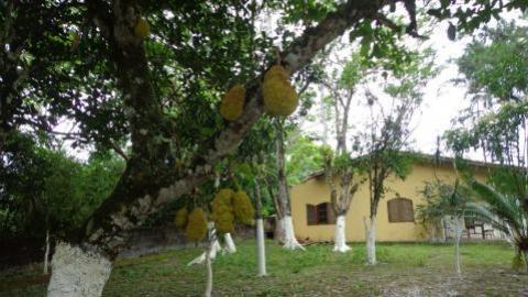 Chácara São Fernando , 400 M. Da Rodovia, Ref. 0806 M H