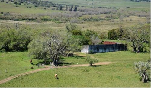 Imagen 1 de 13 de Terreno Campo  En Venta Ubicado En El Tesoro, Punta Del Este
