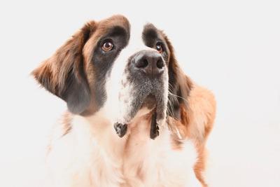 Hotel Y Guarderia Para Perros