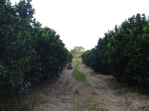 Fazenda A Venda Em Amgatuba - Fa00027 - 32149562