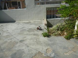 Gallo De Pelea Finos