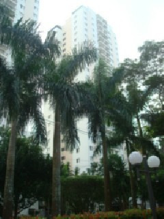 Apartamento - Ap00223 - 1817508
