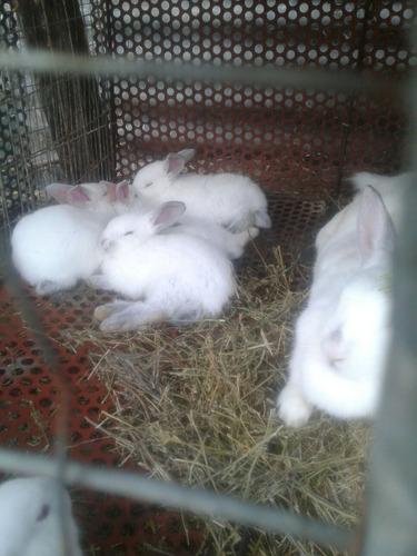 Imagen 1 de 9 de Conejos