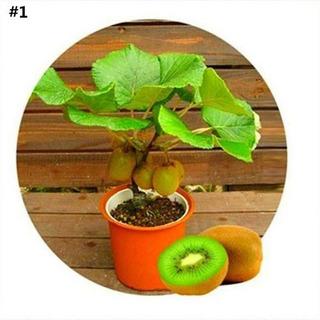 10 Semillas De Frutales Enanos Para Maceta Variados Cultivo