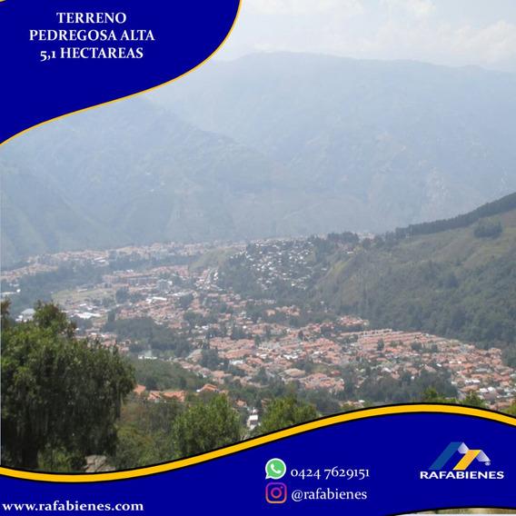 Finca De 5.1 Hectareas Pedregosa Alta Con Proyecto, Merida