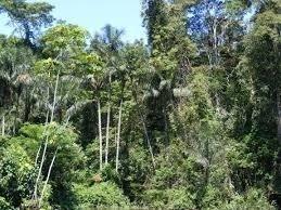 Venda Fazenda Canutama Brasil - 4028