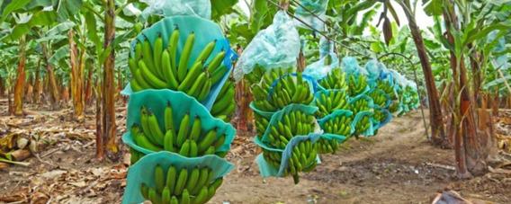 Ventas De Bananeras Y Camaroneras En Ecuador
