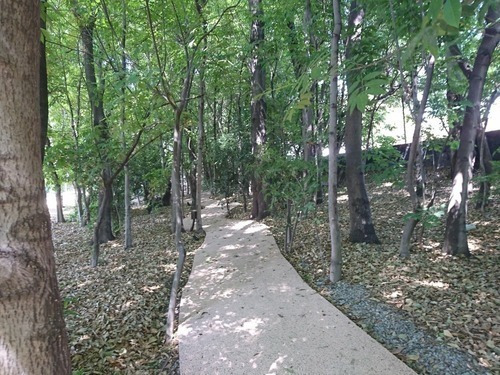 Arboreto Amueblado Moderno 6mil M2 De Áreas Verdes