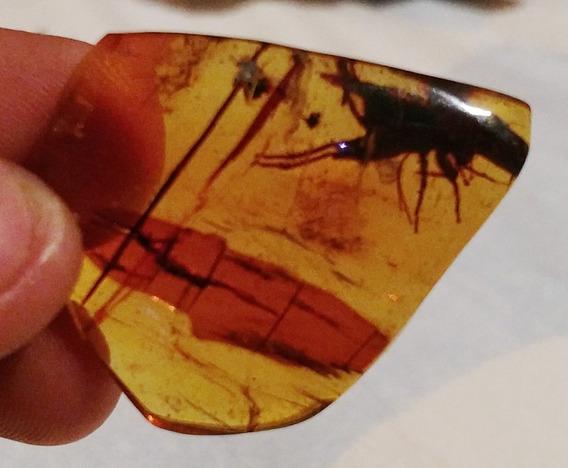 Piedra En Ambar Con Grillo Prehistórico De Gran Tamaño