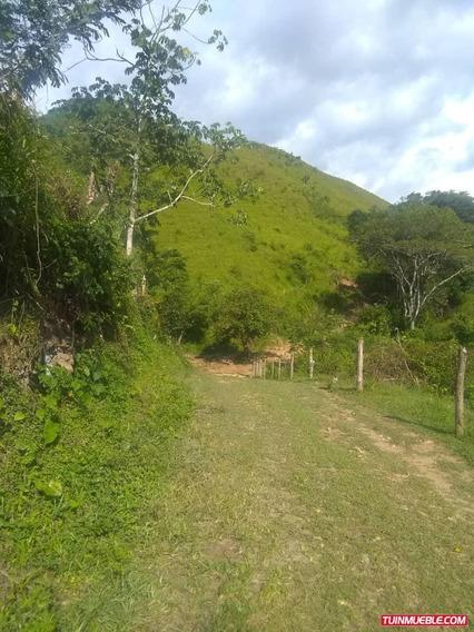 Haciendas - Finca Tinaquillo Cojedes