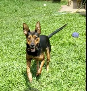 Cachorro En Adopción Responsable