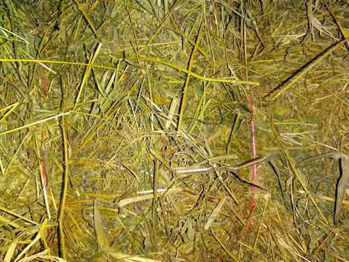Imagen 1 de 2 de Fardos De Alfalfa Y Mezcla