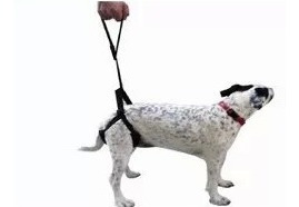 Arnes Para Perros Con Displasia Acolchado Ortopedia Canina