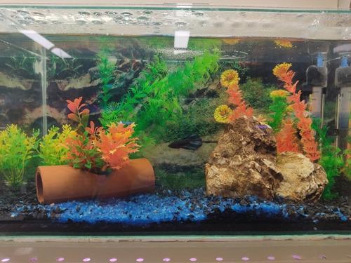 Imagem 1 de 3 de Peixes- Montagem De Aquário Doce - Limpeza Tpa - Esclarecer
