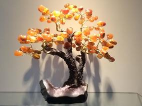 Árvore De Pedras, Árvore Da Vida, Árvore Da Sorte