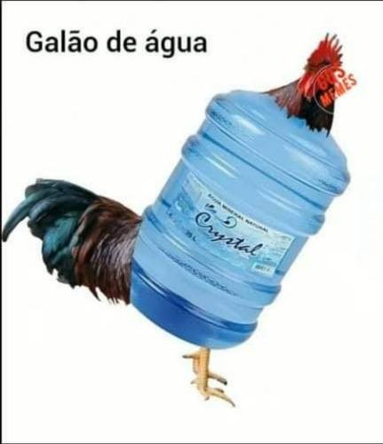 Imagem 1 de 1 de Galão De Água