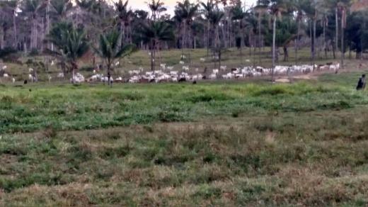 Fazenda A Venda E Troca Estado Roraima (4135)