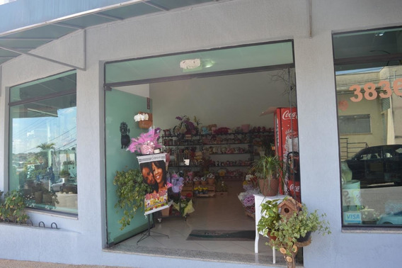 Floricultura Primavera - Vende-se O Ponto Comercial