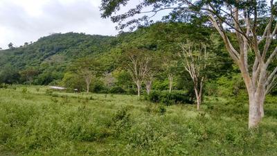 20 Hectares Mata / Reserva Legal /compensação Ambiental