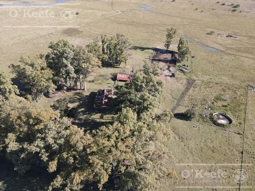 Campo De 600 Has En Venta En Gualeguaychu - Muy Buen Campo Ganadero De 0,7 Ev/ha Con Casco