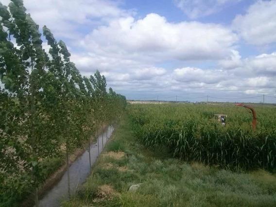 Finca En Las Catitas, Santa Rosa, Mendoza