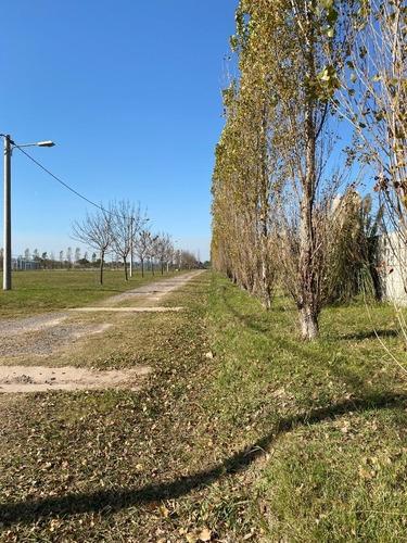 Vendo Terreno De 456 M2 En Ibarlucea - Barrio Las Casuarinas - Barrio Cerrado