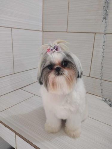 Imagem 1 de 2 de Banho E Tosa Para Cães E Gatos