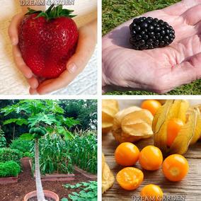 Sementes D Frutas Anãs Para Vasos P/ Mudas - À Sua Escolha -