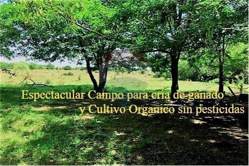 Vta Campo 58 Hectáreas Con Casco Marcos Paz Ruta 6