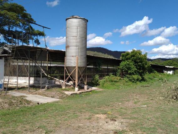 Finca Agropecuaria Y Avicola En Venta, Urb Aguirre, 21-844 Ajc