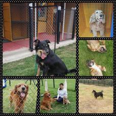 Guardería, Hotel, Adiestramiento Canino Y Venta De Productos
